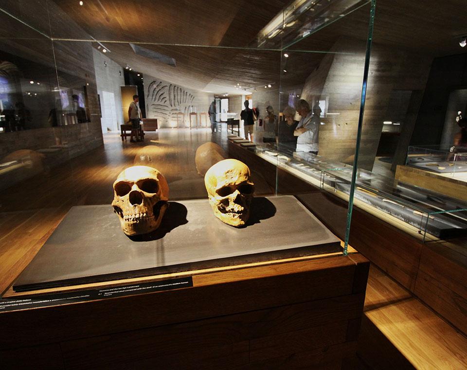 Archeopark Pavlov - expozice, lebky