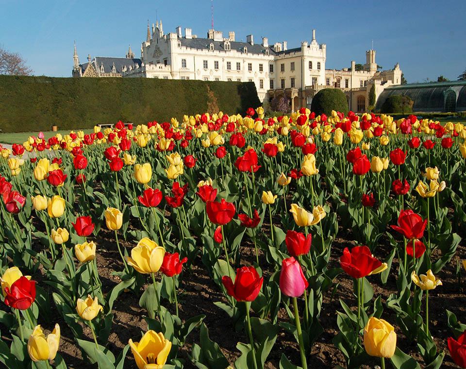 Zámek Lednice s tulipánovým záhonem